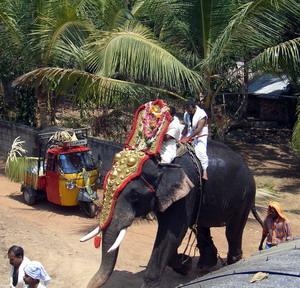 elefant-haus-c.jpg